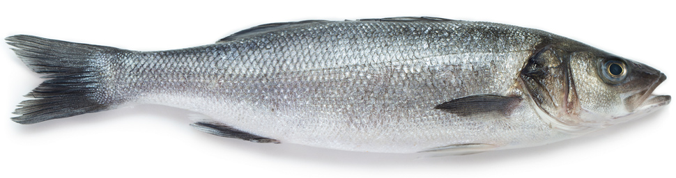 Eat-food-during-pregnancy-omega3-fish